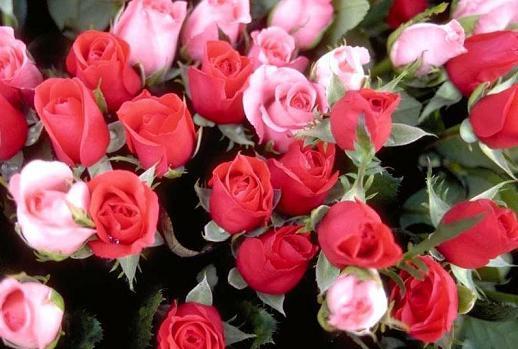 bouquet-rose- amour