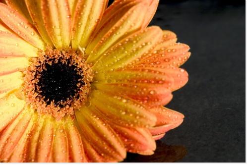 célibataire-compter-fleurette