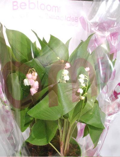 offrir-bouquet-muguet