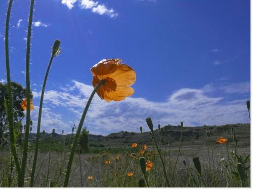 paysage-printemps-fleur