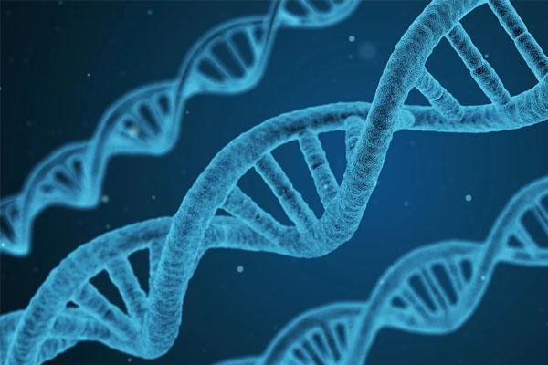 Test adn arbre généalogique